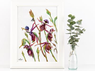 Caleana Major traditional art plants painting herbs drawing botany art watercolor