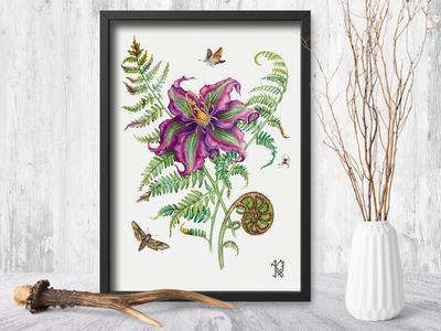 Fern Flower botanical illustration botanical painting mythology legend interior watercolor traditional art plants painting herbs drawing botany art