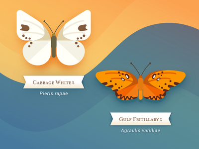 Butterfly Set 1 vector sketch app butterflies white blue orange butterfly illustration