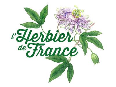L'Herbier De France . identity identity logo