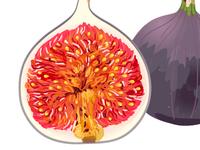 Fig illustration