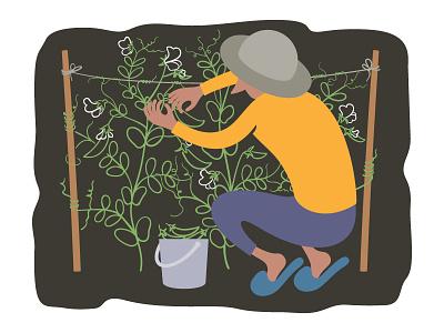 Picking peas plant illustration adobe illustrator vector horticulture gardening
