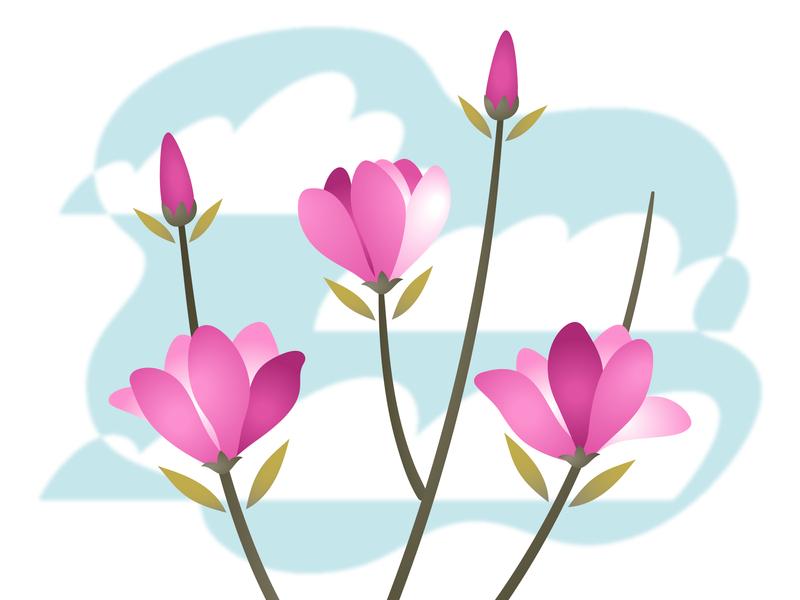 Magnolia flowers magnolia tree plant illustration vector