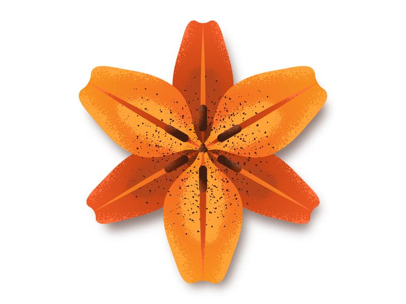 Orange Lily flower lily