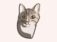 Day 12: Balthazar the cat