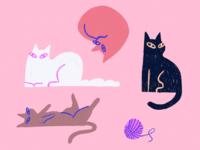D cats