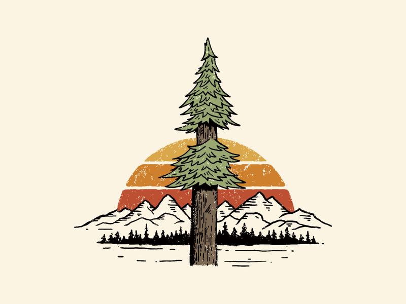 Redwood tree illustration for Woodline Apparel