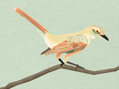 The Mockingbird to kill a mockingbird textures nature tree illustration bird
