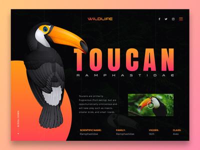 Toucan - Wildlife