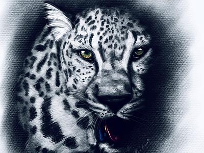 Digital illustration leopard pencil painting illustration animals leopard drawing art digital