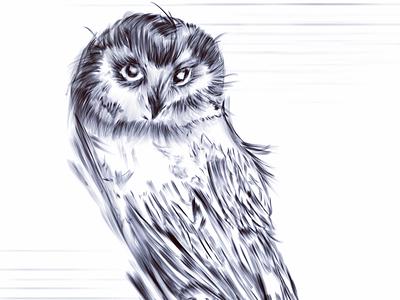 Free drawing owl drawing animals procreate vector artwork owl digital art illustration design