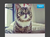 Lil Bub is my new Placekitten