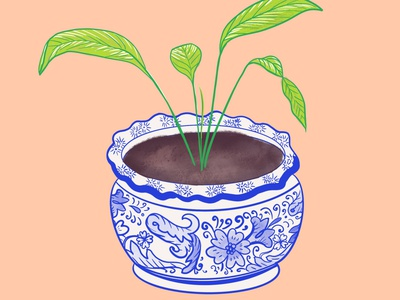 Blue and White Pottery Plant procreate houseplant plant illustration plants planter pottery blue and white illustration