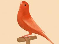Bird illustration #5