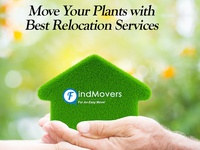 Move Your Plants With Best Packers And Movers Services In Noida
