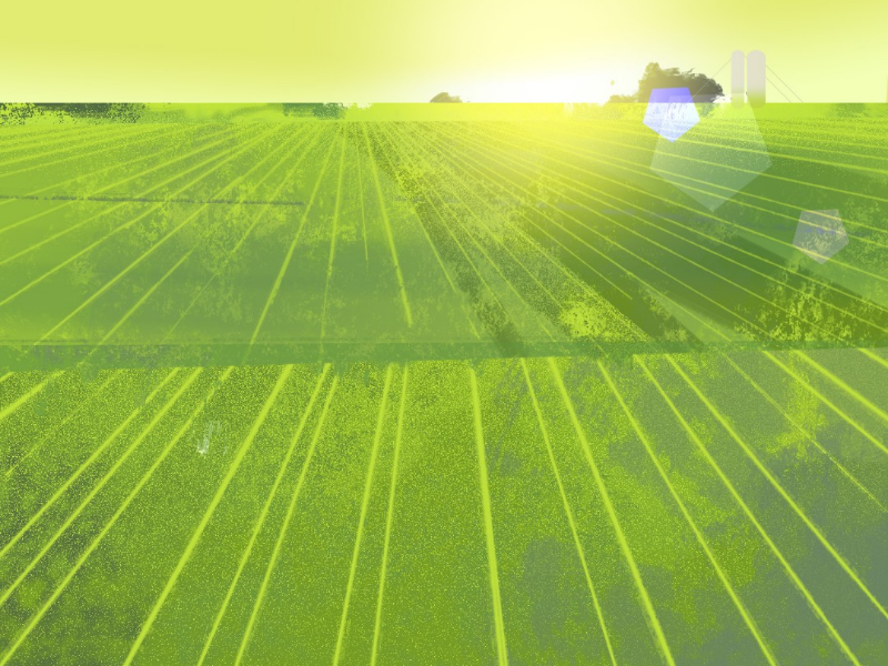 Mornings crop field vector texture photoshop art illustration background mornings