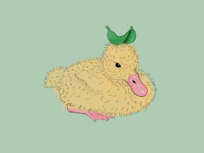 Baby Duck duckling baby duck duck digital drawing ink illustration