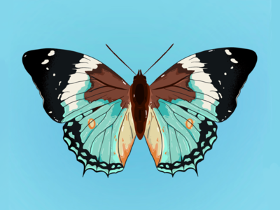 A lazy butterfly debut debutshot nature butterfly insect animal editorial procreate drawing sketch illustration
