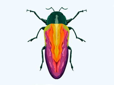 A rainbowy Belionota Sumptuosa editorial debut drawing procreate nature beetle insect animal sketch illustration