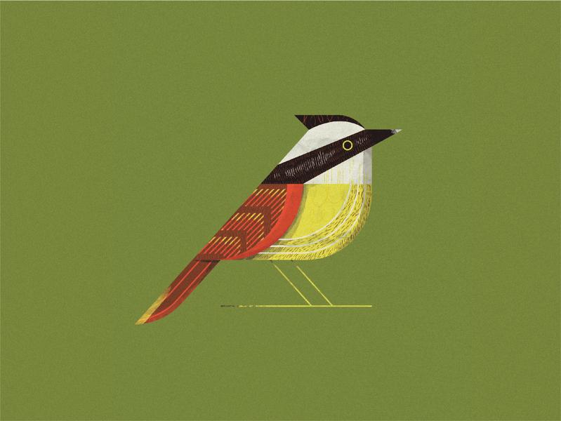 Birb wing texture retro animal bird design illustration