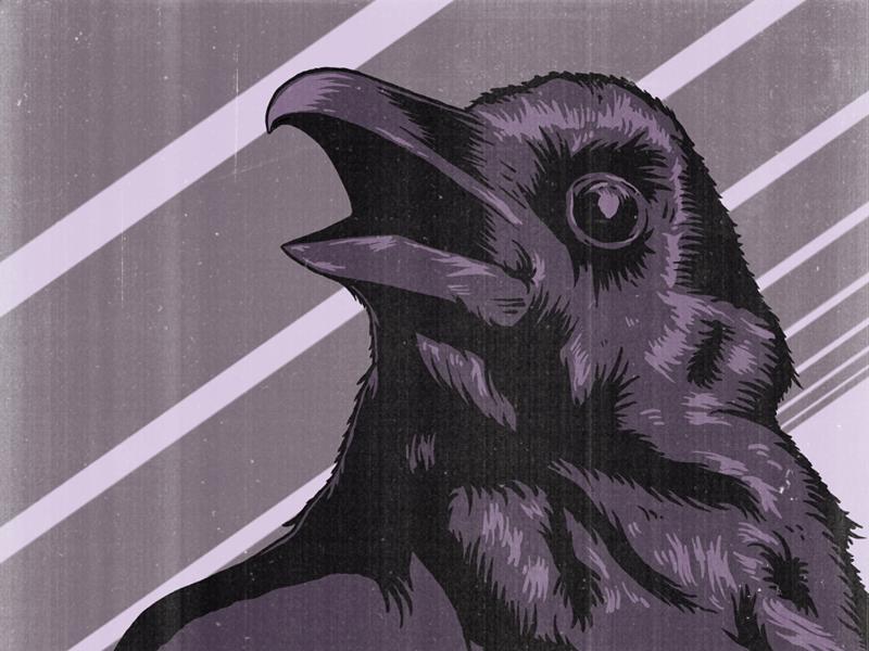 WIP drawing illustration vintage raven bird
