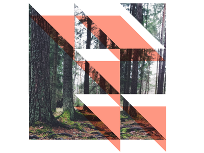 Forest Fragments grid shapes fragments photography