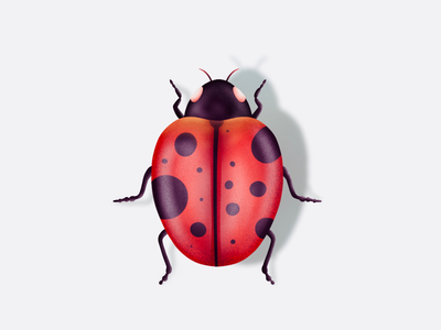Insect illustration