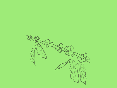 The 100 Day Project (2016 Edition) linear line drawing costa rica coffee plant coffee the100dayproject