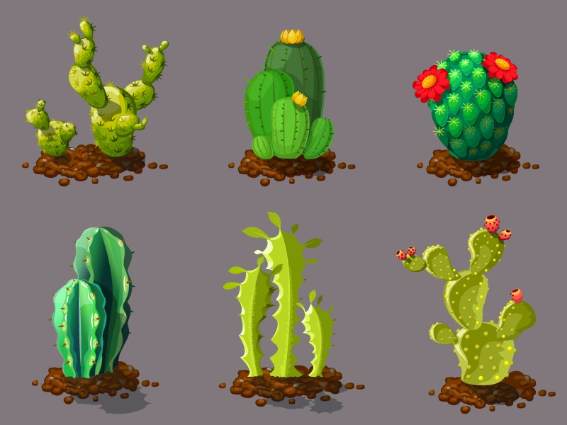 Cute Diffe Types Of Cactus Plants Realistic Decorative Icon Cartoon Cg Set Plant Digital