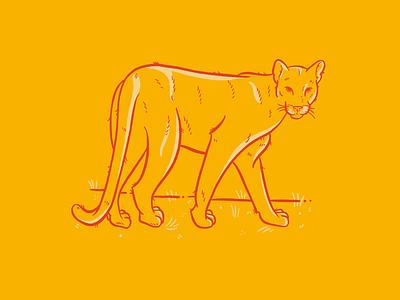 Florida Panther panther florida panther florida illustration procreate cat