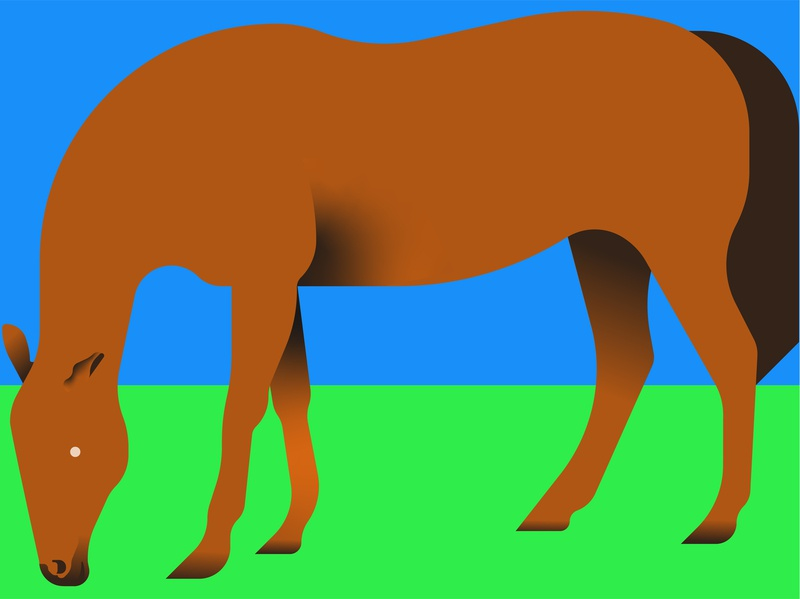 Horse illustrator character animal vector horse
