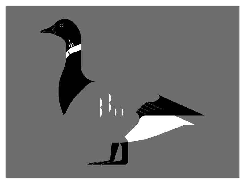 Brent Goose adobe illustrator minimal 2d vector northsea bird goose