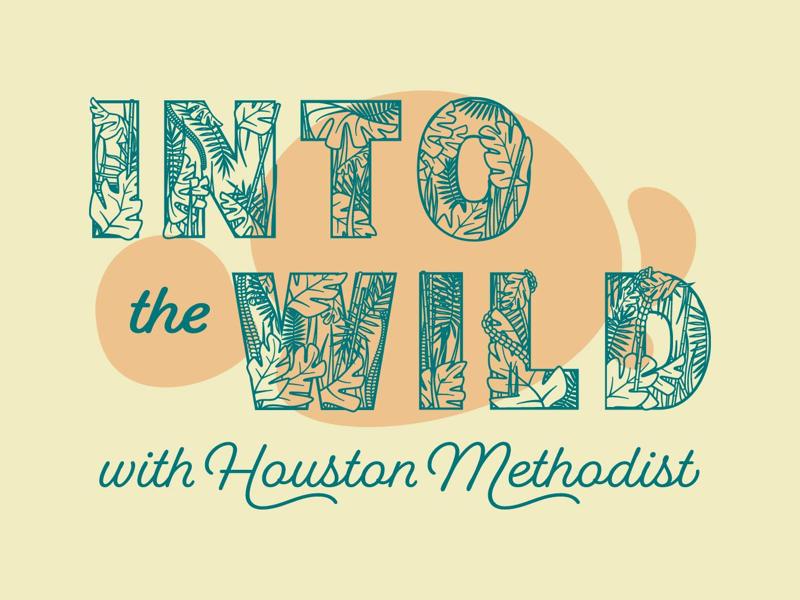 Into the Wild brand identity graphic designer graphic design wild houston zoo branding type typography