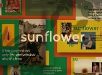Sunflower - Google Slide