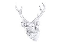 Deer Sketch Design