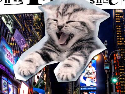 Dribbble Kitten