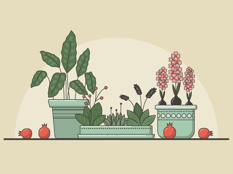 Plants flowers plants