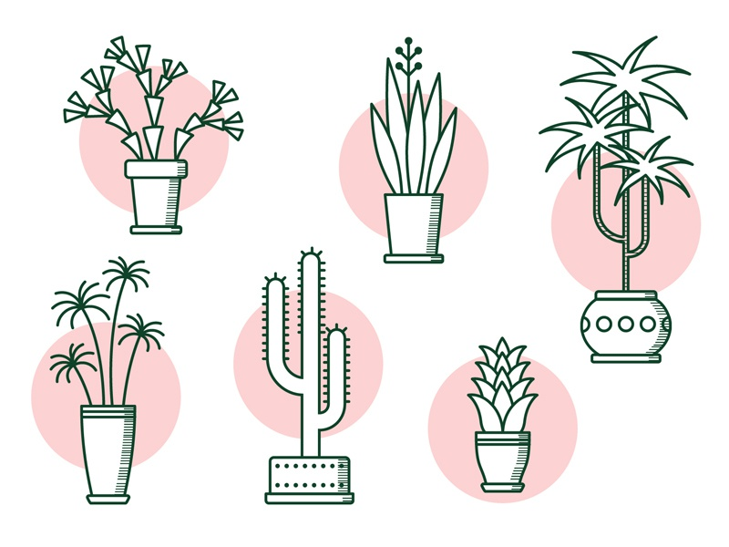 Icons Plants illustration plants icons icons plants
