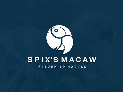 Spix's Macaw: Logo Animation berlin brazil animal macaw parrot spix bird vector logo animation branding