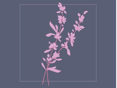 Little Brittons Lavender