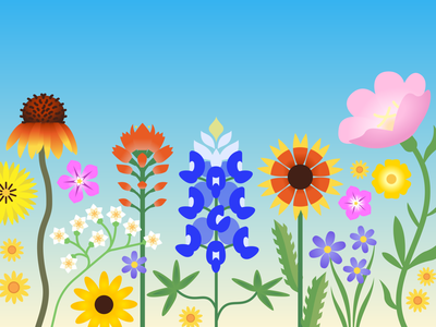 Wildflowers bluebonnet illustration austin texas wildflowers flowers floral