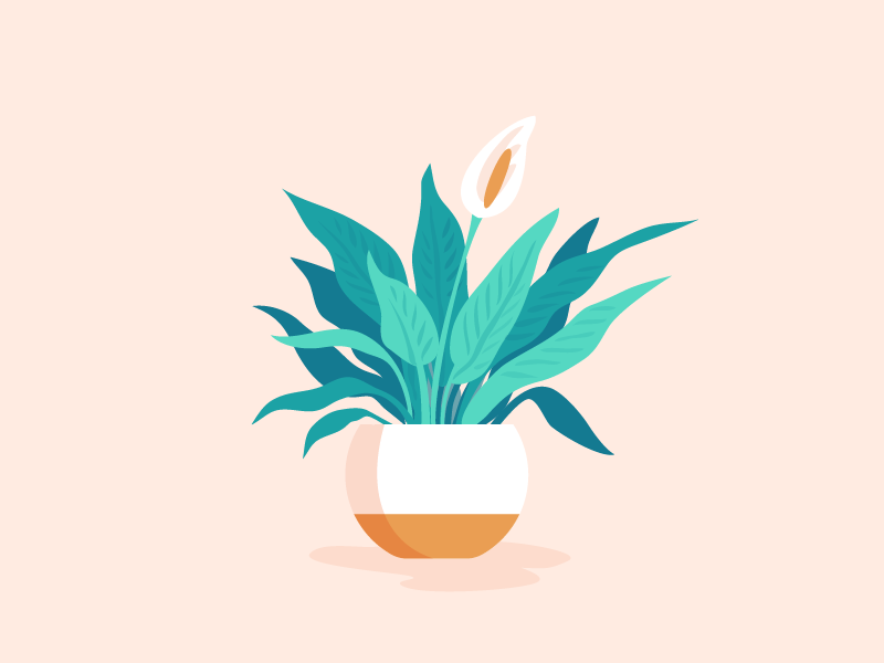 Peace Lily office plant pink plant illustration plant peace lily illustration