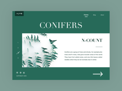 WEB_Conifers