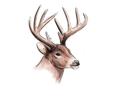 Deer Illustration watercolor illustration deer