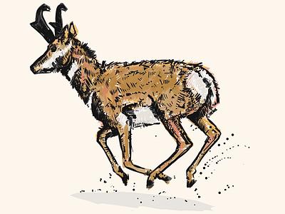 Antelope digital illustration antelope