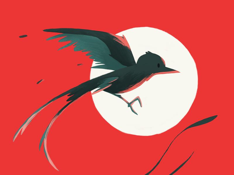 Scissortail Flycatcher minimal cartoon flat simple color poster animal scissortail vibrant red illustration design postcard bird