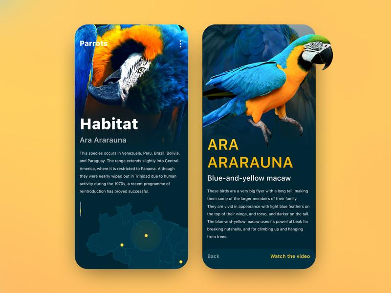 Zoo anthology UI color ui ux uiux design mobile uiux mobile ui mobile interface interface design colorful custom app design interaction ux ui