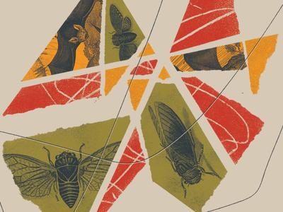 Cicada Collage