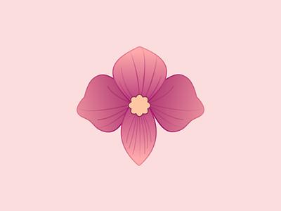 Pink Flower flat botanical design vector artwork vector nature spring pink illustration illustration art illustrator vector illustration plant botanical art botanical illustration flower