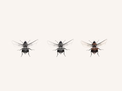 buzz buzz digital illustration insect bees digital color procreate illustration design